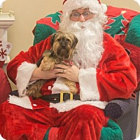Adopt A Pet :: Prue   { PA }PENDING ADOPTION - Akron, OH