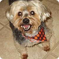 Adopt A Pet :: SKIPPER - Barium Springs, NC
