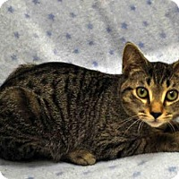 Adopt A Pet :: DRAGON - Naples, FL