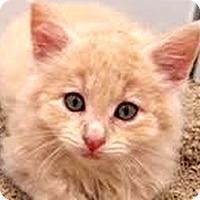 Adopt A Pet :: Callahan - LaJolla, CA