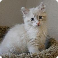Adopt A Pet :: Minnie - Davis, CA