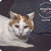 Adopt A Pet :: Queenie - Cincinnati, OH