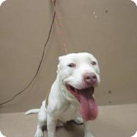 Adopt A Pet :: KADOE - Reno, NV