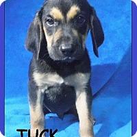 Adopt A Pet :: Tuck - Batesville, AR