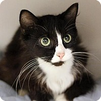 Adopt A Pet :: POKEY - Boston, MA