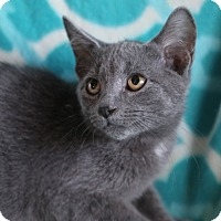 Adopt A Pet :: Natasha - Hagerstown, MD
