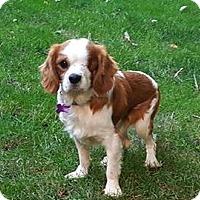 Adopt A Pet :: Charlie - Elyria, OH