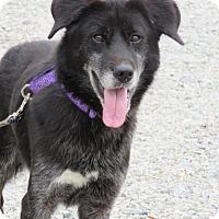Adopt A Pet :: Malaki - Richmond, VA
