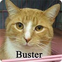 Adopt A Pet :: Buster - Warren, PA