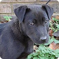 Adopt A Pet :: *Perry - PENDING - Westport, CT