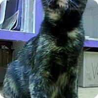 Adopt A Pet :: Sandra Bullock - Richboro, PA