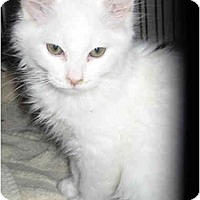 Adopt A Pet :: Roark - Davis, CA