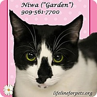 Adopt A Pet :: A Young Female: NIWA - Monrovia, CA