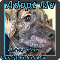 Adopt A Pet :: Melvin - Cheney, KS