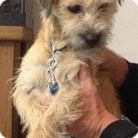Adopt A Pet :: Alley - Flemington, NJ