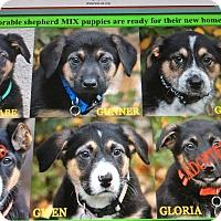 Adopt A Pet :: GABE, GUNNER,GREY,GWEN - Los Angeles, CA