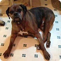 Adopt A Pet :: TURNER - Albany, NY