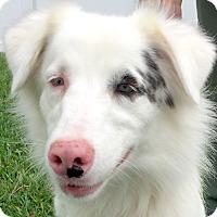 Adopt A Pet :: Tia(Foster or Adopt) - St Petersburg, FL