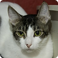 Adopt A Pet :: Nutmeg - Sarasota, FL