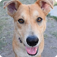 Adopt A Pet :: Fergie - Adopted! - San Diego, CA