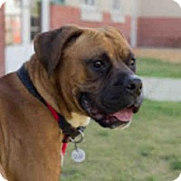 Adopt A Pet :: QUE - Upper Marlboro, MD