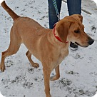 Adopt A Pet :: Cece