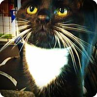 Adopt A Pet :: amadeus - Glen cove, NY