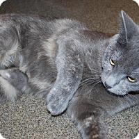 Adopt A Pet :: Bailey - Council Bluffs, IA