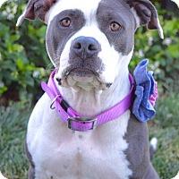Adopt A Pet :: Petunia - Dublin, CA