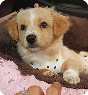 Jindo Mix Dog for adoption in Litchfield Park, Arizona - Harry