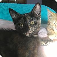Adopt A Pet :: Neptune - Elyria, OH