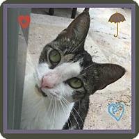 Adopt A Pet :: Maxie - Miami, FL