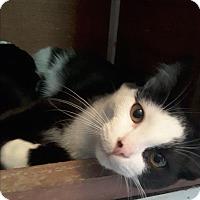 Adopt A Pet :: Phantom - Toronto, ON