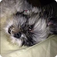 Adopt A Pet :: Princess - Westport, CT