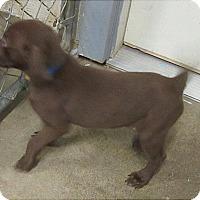 Adopt A Pet :: Chanp - Glenwood, MN