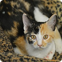 Adopt A Pet :: Marilyn - San Leon, TX