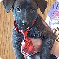 Adopt A Pet :: Dune - Princeton, MN