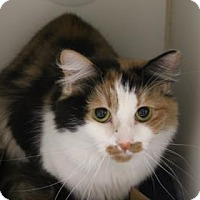 Adopt A Pet :: Fluffy - Greensboro, NC