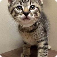 Adopt A Pet :: Blitzen - Shorewood, IL