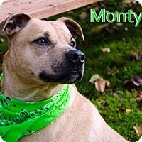 Adopt A Pet :: Monty - Hamilton, MT