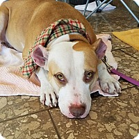 Terrier (Unknown Type, Medium) Mix Dog for adoption in Umatilla, Florida - Rose