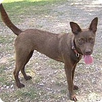 Labrador Retriever Mix Dog for adoption in Miami, Florida - Tyra