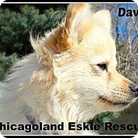 Adopt A Pet :: Davin - Elmhurst, IL