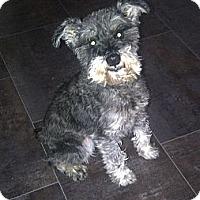 Adopt A Pet :: Frodo - Rigaud, QC