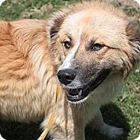 Adopt A Pet :: Warner - Stilwell, OK