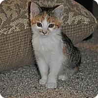 Adopt A Pet :: Sammy - Modesto, CA