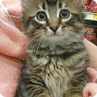 Adopt A Pet :: Benson - Reston, VA