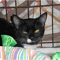 Adopt A Pet :: Carlos Quentin - Lombard, IL