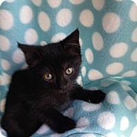 Adopt A Pet :: Dash - Union, KY