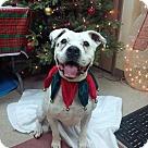 Adopt A Pet :: Jusky